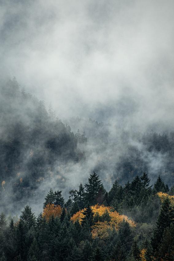The Fall Fog