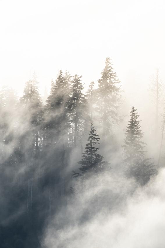 The Evening Fog